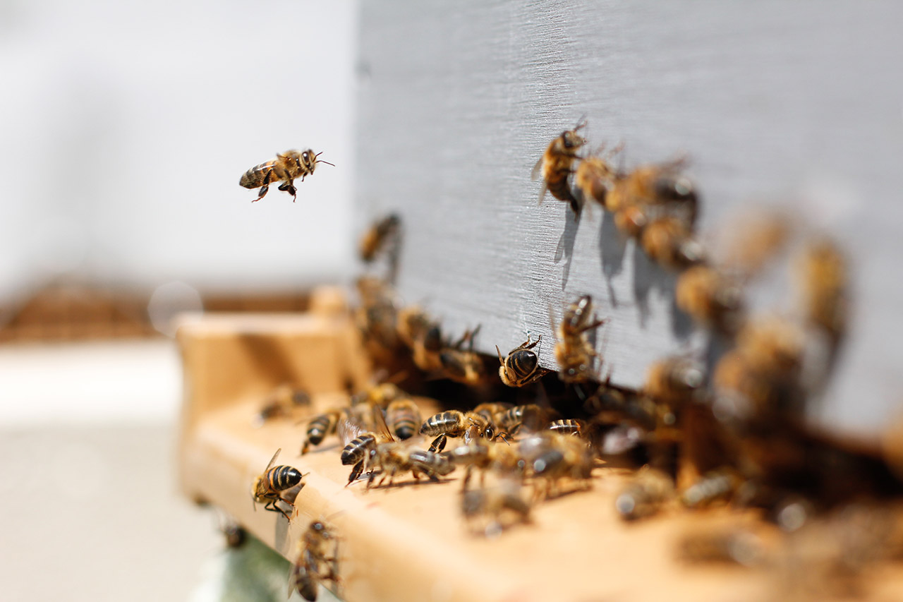 Bienenstock kaufen Infoportal
